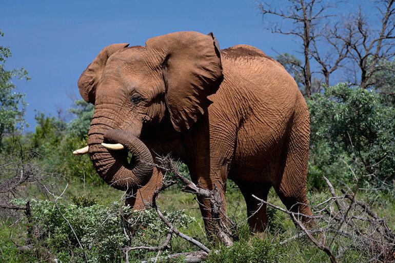 Слоны во сне