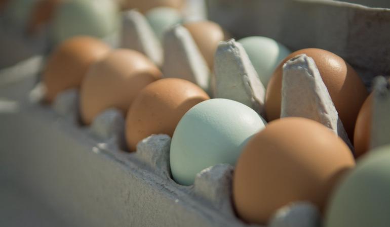 Куриное яйцо во сне