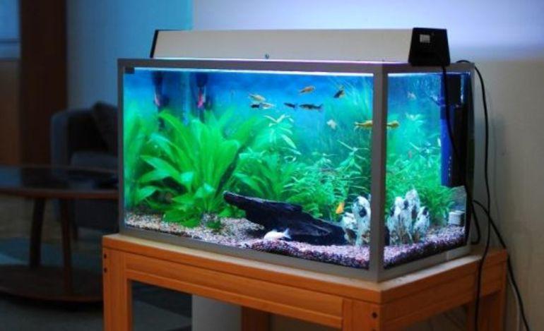Сонник с аквариумом