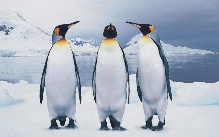 Особенности явления пингвинов в ночных грёзах