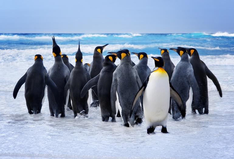 Значение сна про пингвинов
