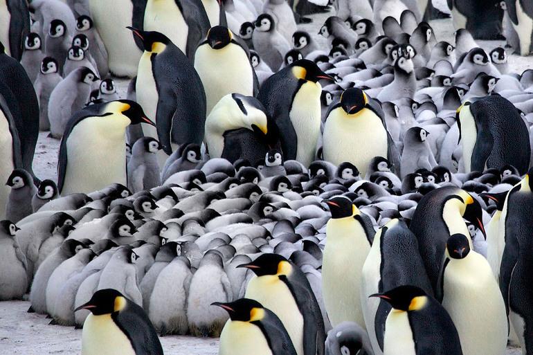 Видеть во сне много пингвинов