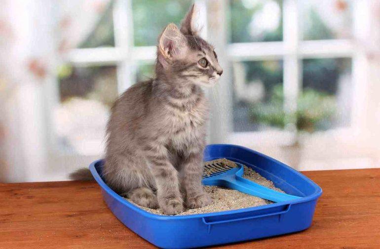 К чему снятся кошачьи какашки
