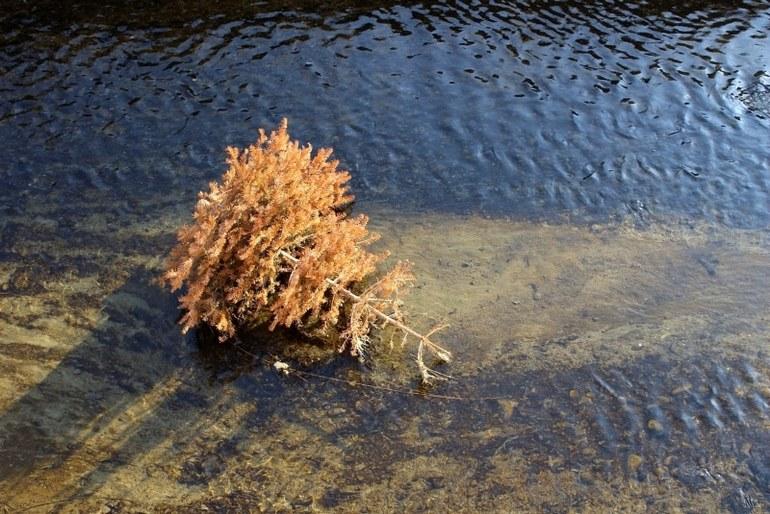 Засохшая елка