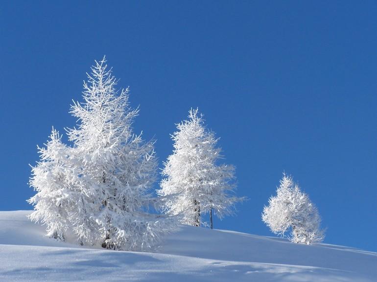 Снится чистый снег