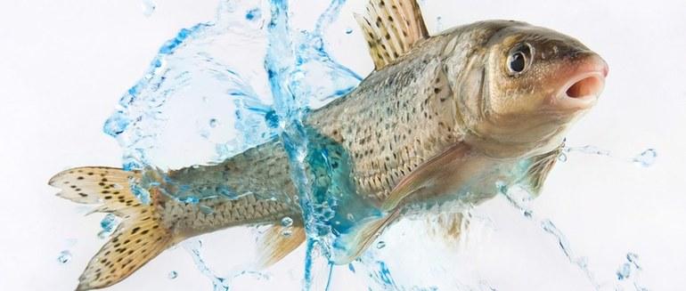К чему снится тухлая рыба: