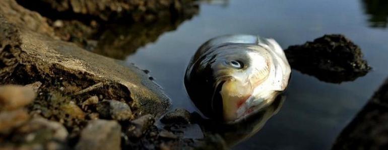 Дохлая рыба во сне