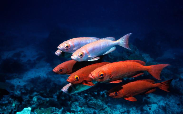 Особенности снов о маленьких рыбках