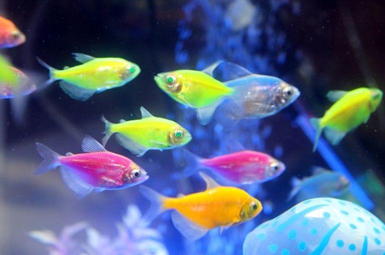 К чему видеть во сне много маленьких рыбок