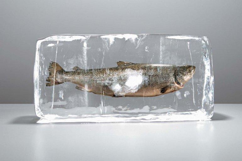Замороженная рыбка во сне