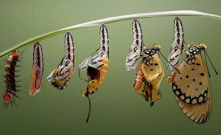 Гусеница превращается в бабочку,