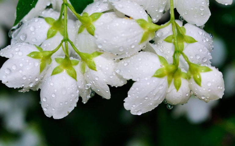 Толкования сонников: к чему снятся белые цветы