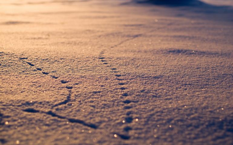 Неопознанные следы на земле