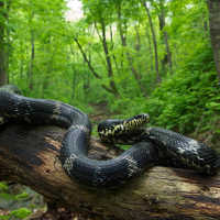 Большая змея во сне мужчины и женщины: общее толкование