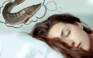 К чему снится рыба женщине или мужчине: толкование по соннику