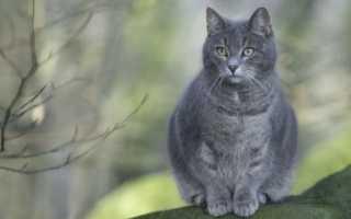 Сонник: к чему снится серая кошка