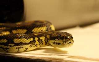К чему снятся змеи: толкование по сонникам для женщин и мужчин