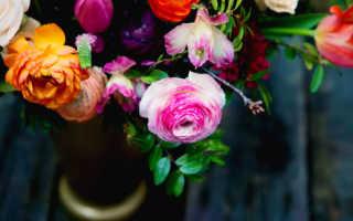К чему снятся цветы: толкования по соннику для мужчин и женщин