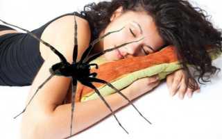 Сонник: к чему снится укус паука за руку, ногу или палец