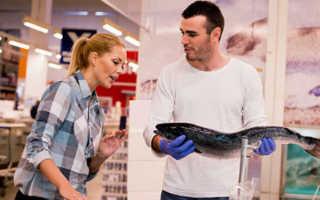 К чему снится покупать рыбу: трактовка по сонникам