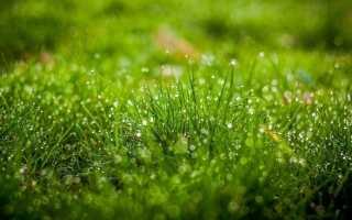 К чему снится свежая или сухая трава: толкование по соннику