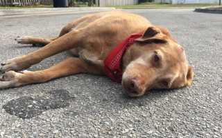 Трактовки в разных сонниках к чему женщине снится смерть своей собаки