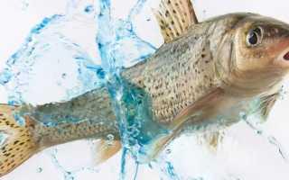 К чему снится тухлая рыба: толкование по различным сонникам