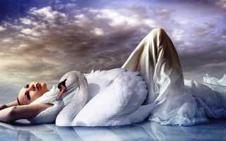 Сон, где снится лебедь: толкование по сонникам