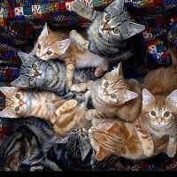 К чему женщине снятся кошки и очень много кошек и котов