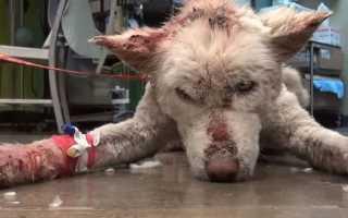 Разъяснение по сонникам к чему снится собака в крови