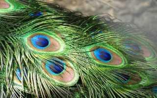 К чему снятся перья по соннику