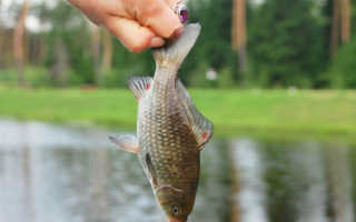 Что означает ловить рыбу руками во сне для мужчины и женщины