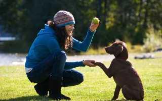 К чему снится играть с собакой во сне