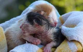 Родить во сне котенка вместо ребенка: толкования сонников