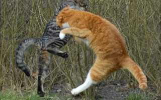 К чему снятся дерущиеся кошки или коты: толкование по сонникам