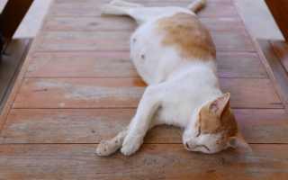 К чему снится беременная кошка: толкования популярных сонников
