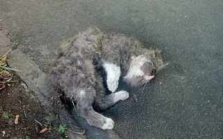 Сонник: к чему снится раненая кошка