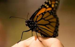 Толкования к чему снятся много красивых бабочек по сонникам