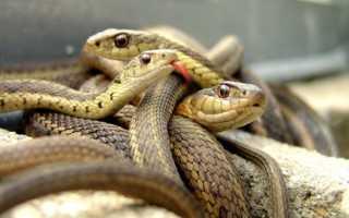 Значение по соннику к чему снится клубок кишащих змей