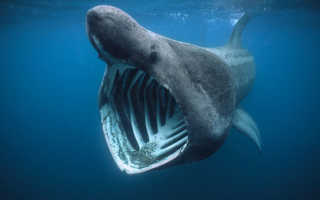 К чему снится большая или маленькая акула в воде, аквариуме, ванной