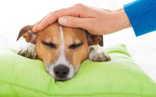 К чему снится покупка собаки или щенка: трактовка по сонникам