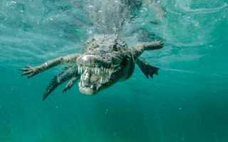 Сон, где снятся крокодилы в воде: значение по сонникам