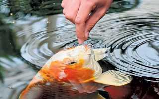 К чему снится кормить рыбу во сне: толкование сонников