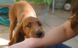 Значение и толкование укуса собаки за руку во сне