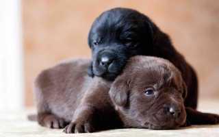 Что предвещают две собаки во сне по разным сонникам