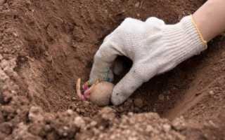 Расшифровка по сонникам: к чему может приснится сажать картошку