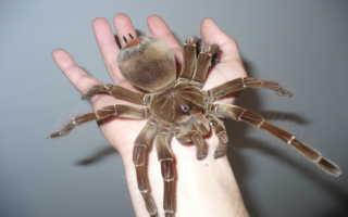 К чему снятся большие и маленькие пауки по соннику