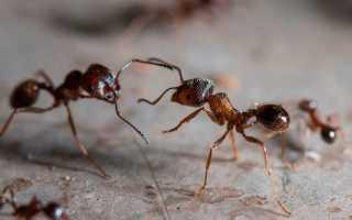 К чему снятся муравьи: толкование по различным сонникам
