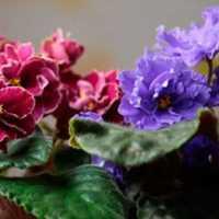 К чему снятся комнатные цветы: толкования различных сонников