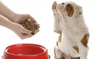 К чему снится кормить человека или животных: толкования сонников